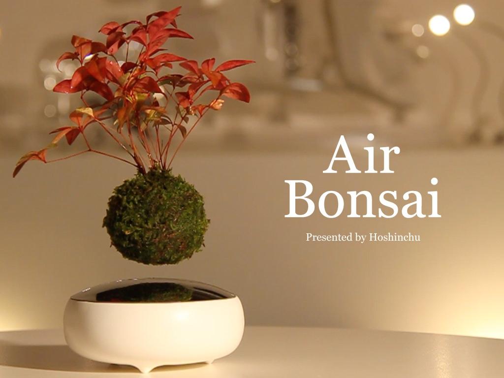 """""""Танцующие"""" в воздухе деревья Air Bonsai"""