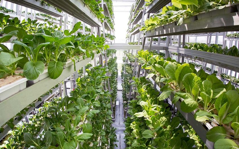 """Résultat de recherche d'images pour """"vertical farm"""""""