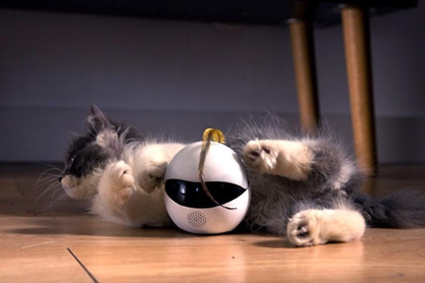 На Kickstarter собирают деньги на «умного» кошачьего робота Ebo