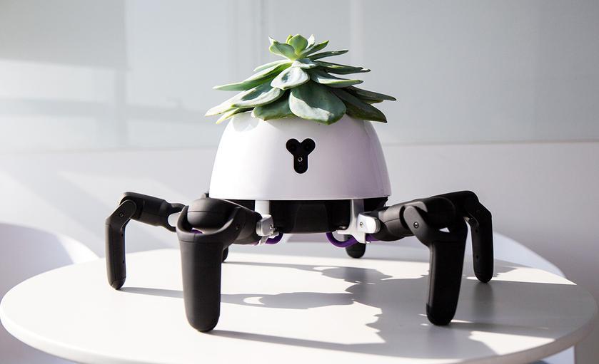 Робот-паук Hexa «выгуливает» комнатные растения на солнце
