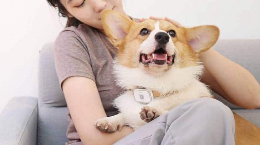 Xiaomi выпустила «умный» ошейник для собак с GPS и калькулятором калорий