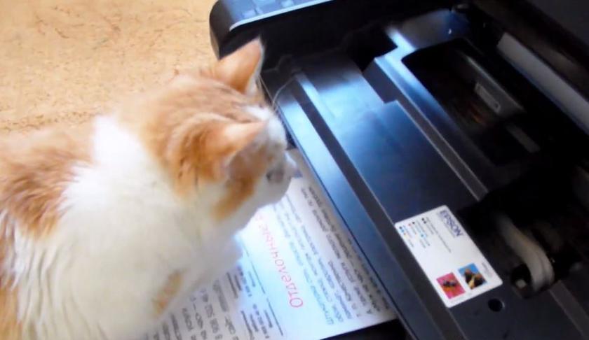Лучший принтер для дома и школы